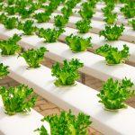 greenhouse-2139526_640